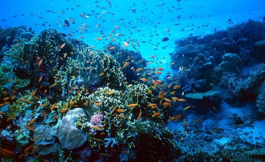 vie sous marine agde