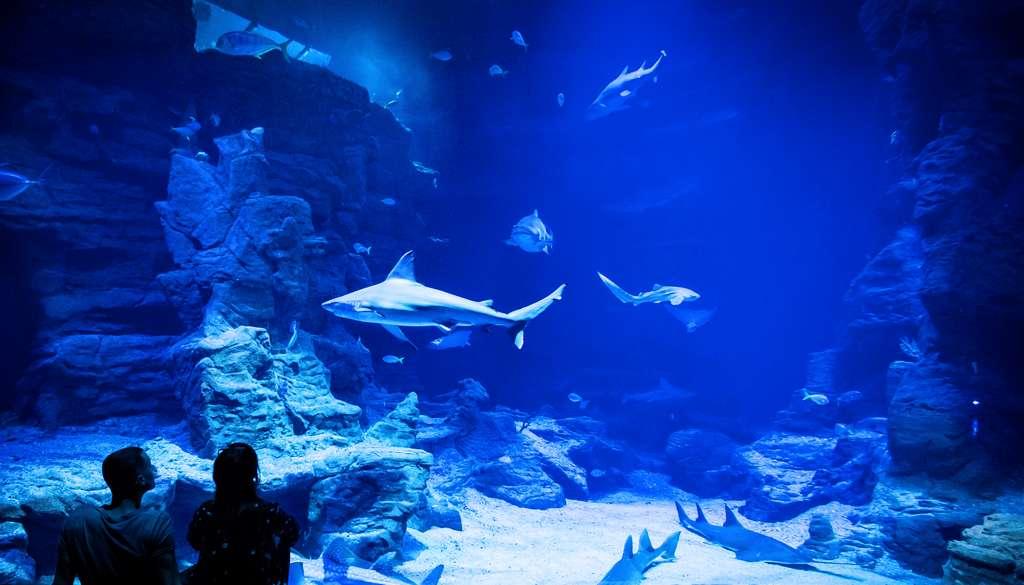 Requins Planet Océan
